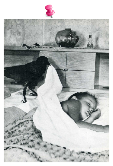 kid-crow-tack